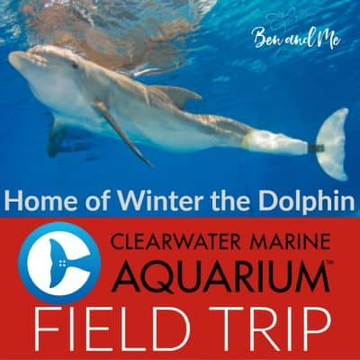Winter the Dolphin (a field trip to the Clearwater Marine Aquarium)