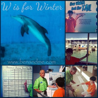 W is for Winter the Dolphin (not the season)