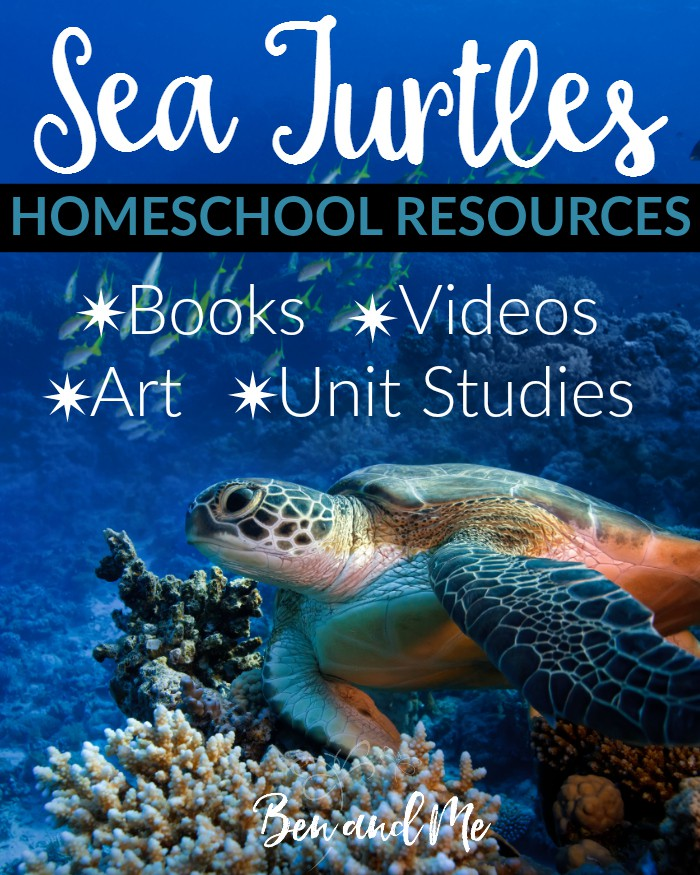 Sea Turtles books, videos, art projects, and unit studies for your homeschool.