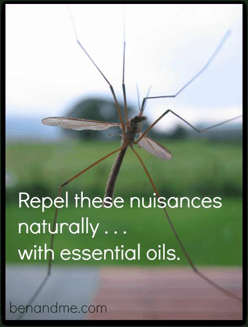 mosquito essential oils