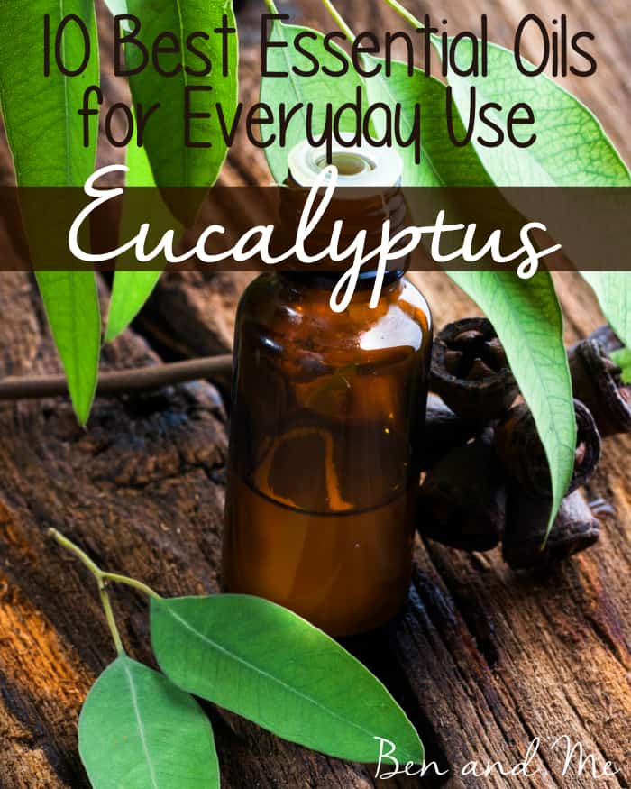 Eucalyptus essential oil is a handy oil to have around. It'll break up congestion, soothing cough, clean surfaces and scare away insects!