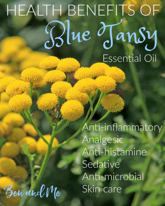 Blue Tansy essential oil has anti-inflammatory, anti-histamine, anti-fungal, analgesic and sedative properties. It's great for sore muscles and skin care.