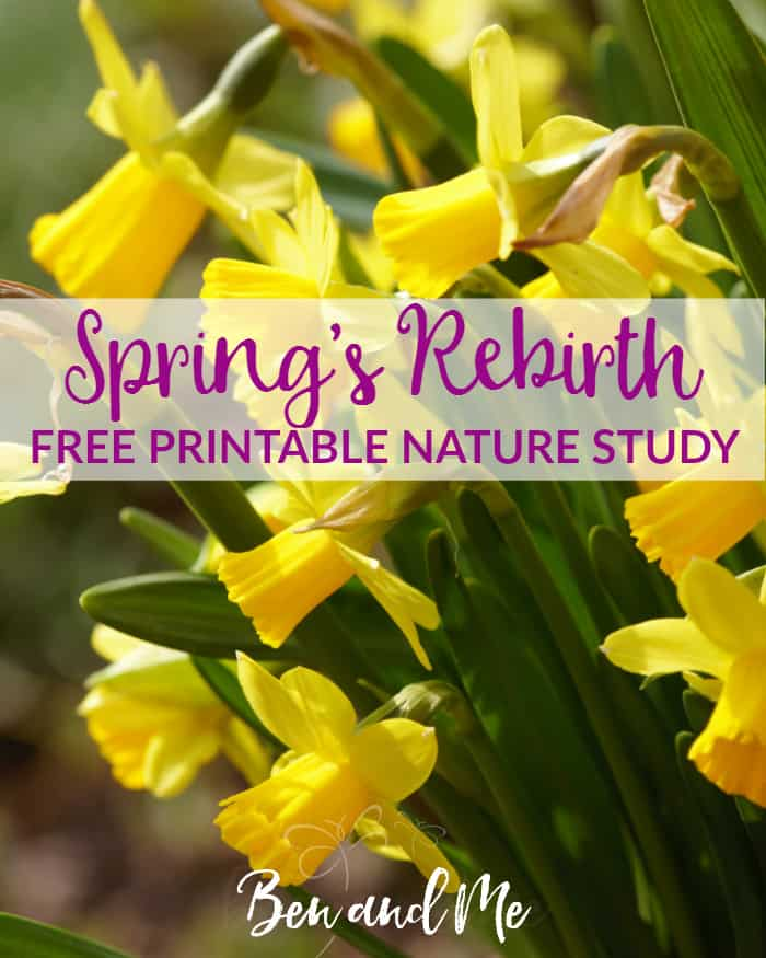 FREE! Nature study printable. I want to encourage you to get outdoors with your kids. Take a walk, explore, find those wonderful treasures you'll only see this time of year.